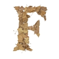 letter initial F autumn leaves ultra realistic